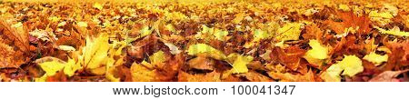 Autumn Leaves, Super Wide Banner