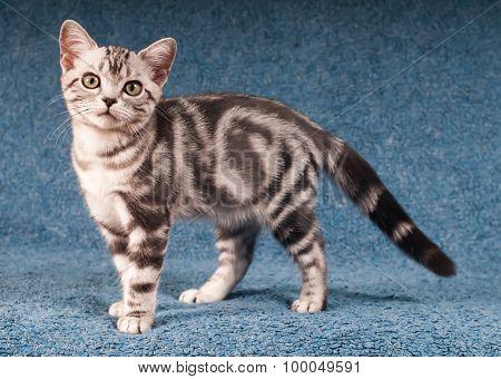 Kitten Portrait Full Lenth