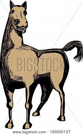 Single Brown Horse
