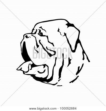Dogue De Bordeaux.eps