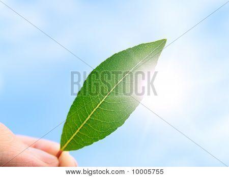 A pessoa tem em uma mão uma folha