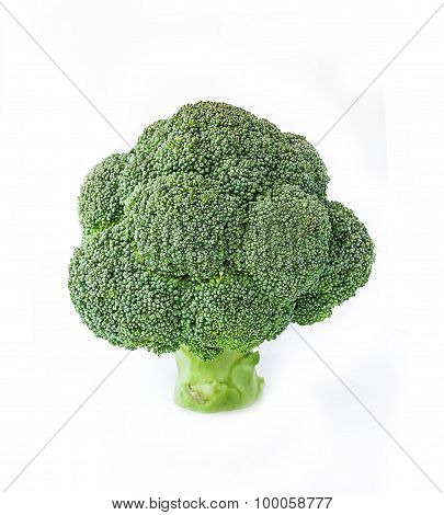Big Tree Shape Of Fresh Broccoli On White Background