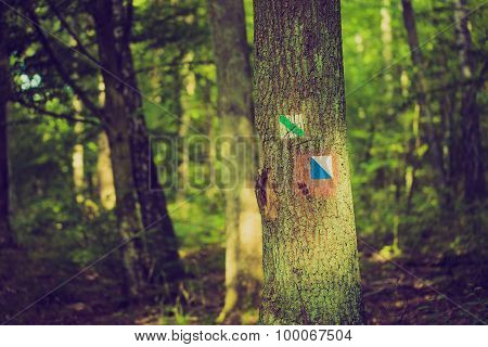 Vintage Photo Of Trail Sign Painted On Tree Bark In Summertime Forest.