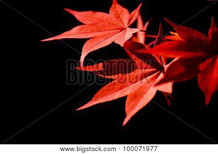 Colorful Autumn Leaf Season