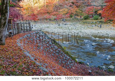 Colorful Autumn Leaf And River In Countrysid Of Japan