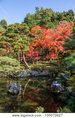 Japanese Style Garden In Autumn (koyo)
