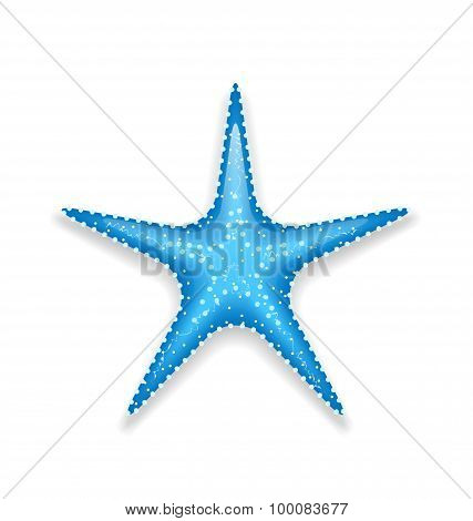 Blue starfish isolated on white background