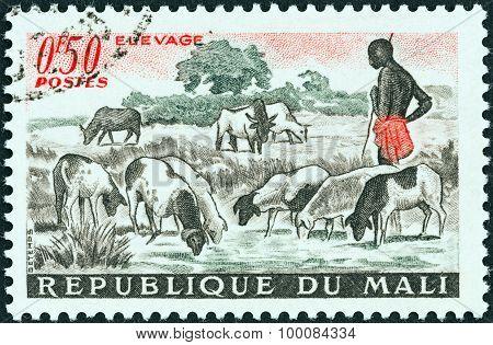 MALI - CIRCA 1961: A stamp printed in Mali shows sheep at pool