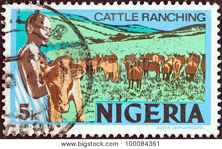NIGERIA - CIRCA 1973: A stamp printed in Nigeria shows Cattle ranching