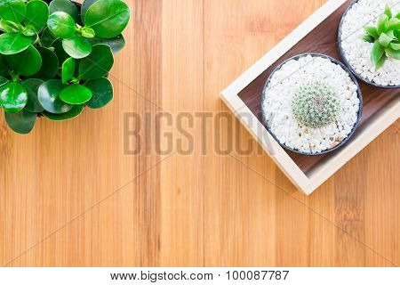 Still Life Natural Tree Cactus Plants on Vintage Wood Background Texture