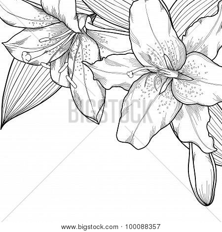 Graphic Black And White Lilies. Decoration On A White Background
