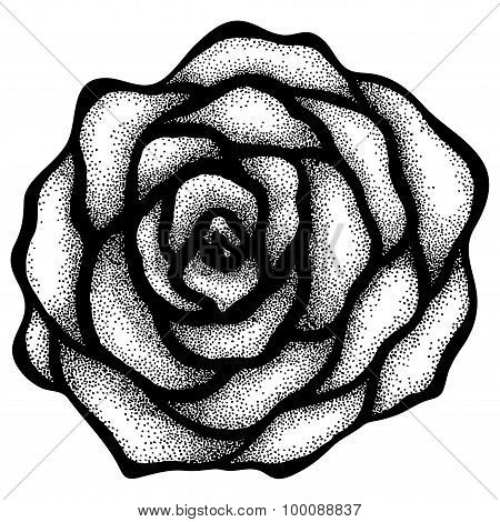 Abstract Rose Free-hand Drawing In A Graphic Style Points And Lines.