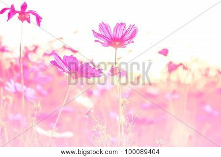Beautiful Flowers Made With Color Filters, Flower Background.