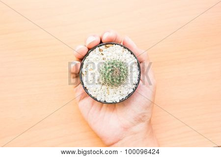 Top view of Hand holding a green tree on a wooden table. Show to live with natural harmony.