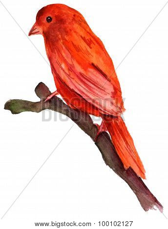 A watercolour drawing of a bright red bird sitting on a branch on white background