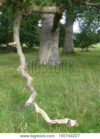 Branched Tree Within Forest Rural Landscape