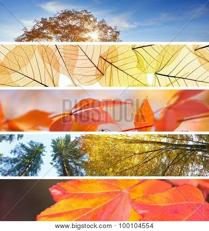 Set of Different Fall Headers - colorful autumn abstract  backgrounds for your website