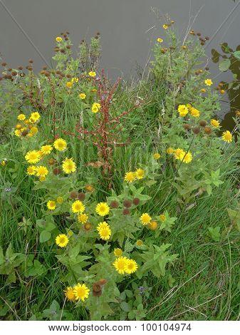 Lakeside Rural Flowers