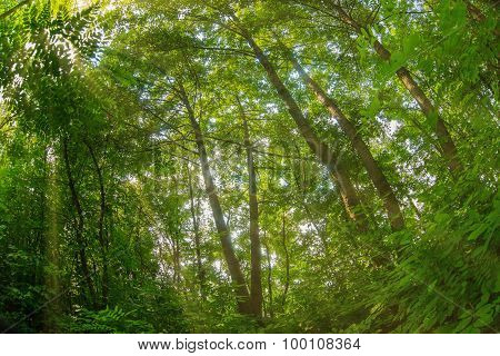 thick green forest summer nature landscape photo Russian