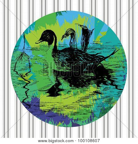 Swimming Duck In Pool