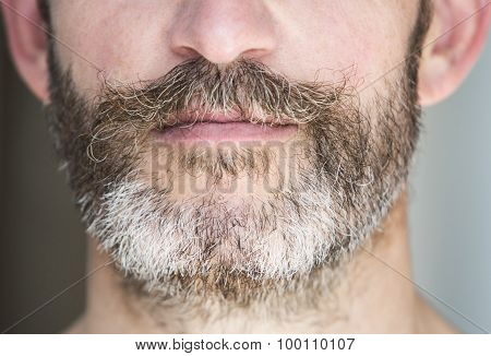 Closeup Of A Man's Beard