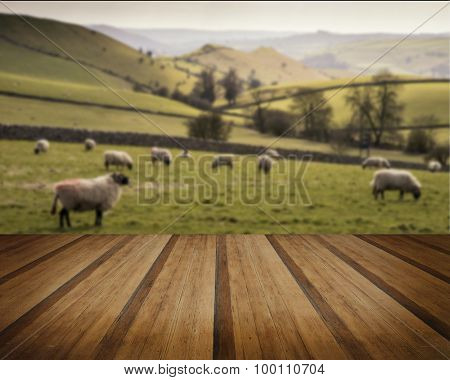 Sheep Animals In Farm Landscape On Sunny Day In Peak District Uk Concept Image