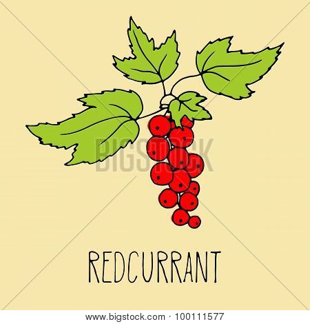 Hand drawing illustration of redcurrant.