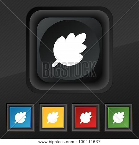 Leaf, Fresh Natural Product  Icon Symbol. Set Of Five Colorful, Stylish Buttons On Black Texture For