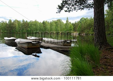 Peaceful Lake View