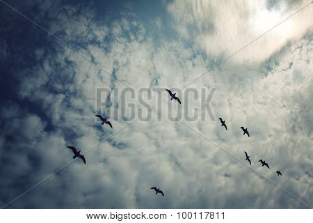 Group Of Seagulls Above The Lake Ladoga. Aged Photo.