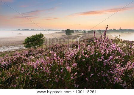 Romantic Sunrise In A Dutch Nature Moorland