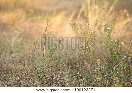 Dry Grass Close-up As A Background