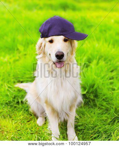 Golden Retriever Dog In Cap Sitting On The Green Grass Summer