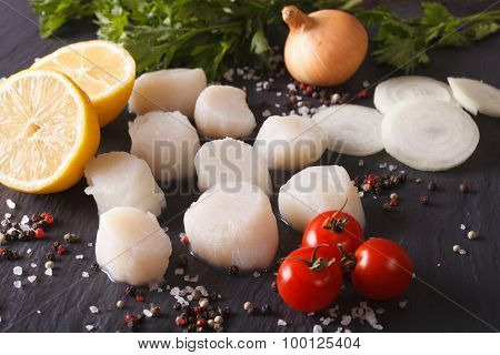 Raw Scallops And Ingredients Close-up. Horizontal