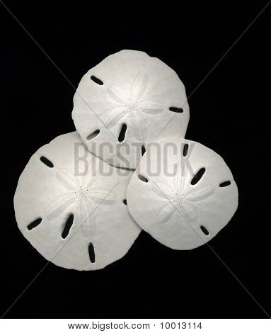 Sand Dollars on Black