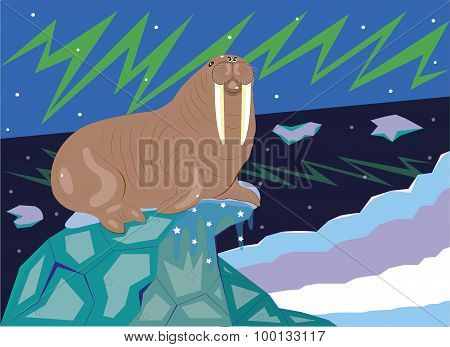 The walrus on lies on an ice floe.