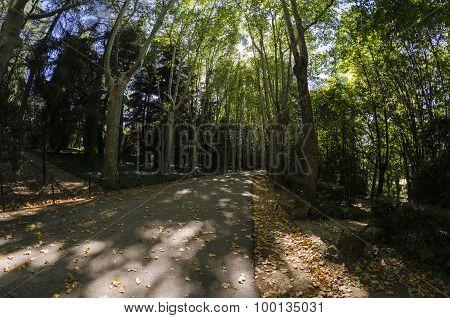 Park pathway