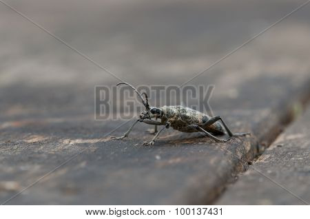 Grey Beatle On Table