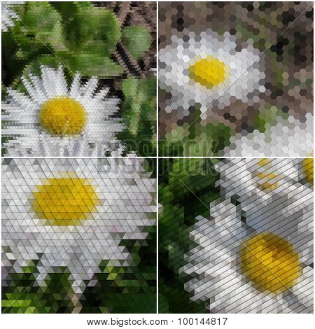 White flowers on the grass. Collection of abstract multicolored backgrounds. Natural geometrical pat
