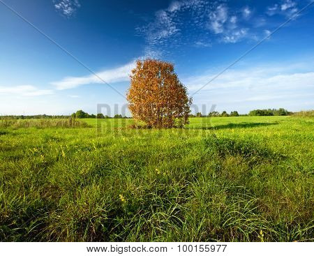 a tree on the field