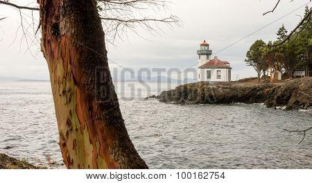 Madrona Tree Lime Kiln Lighthouse San Juan Island Haro Strait