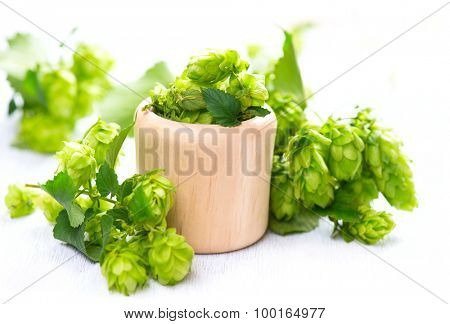 Hop in a wooden bowl on a white table. Green whole hops with leaves close up isolated over white background. Beer brewery concept. Ingredients for beer. Alternative medicine