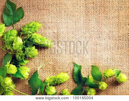 Hop branch over Burlap background. Beer production ingredient. Brewing. Copy-space for your text. Beautiful vintage backdrop of fresh hops over shabby sack linen texture.