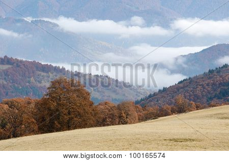 Landscape in the mountain village. Autumn fog overcast day. Beech forest on the slopes. Beauty in nature