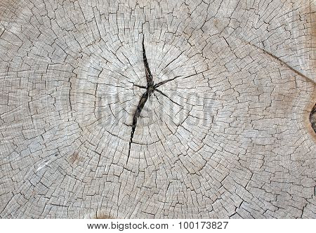 Top View Of An Old Gray Texture Of A Tree Trunk