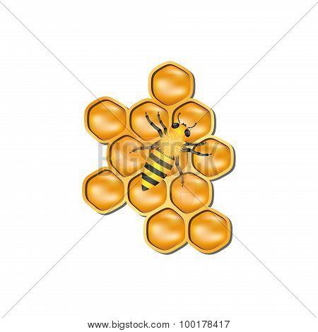 Bee honeycomb with honey bee
