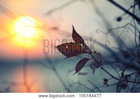 Dry Foliage On A Background Sunset