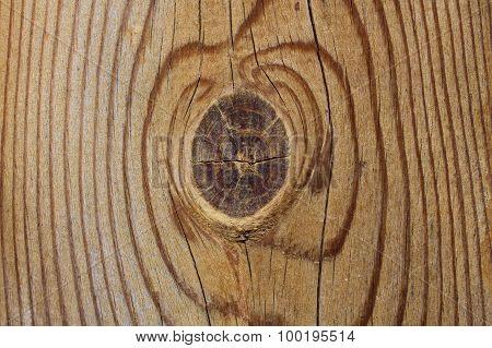 Cut Wood Texture