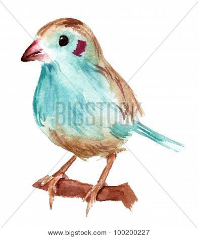 A watercolour drawing of a red-cheeked cordon-bleu bird on white background