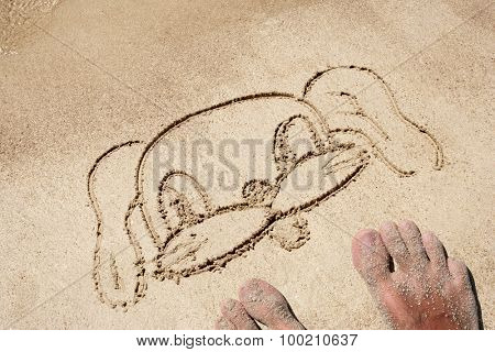 Concept or conceptual dog head drawn in sand for natural, symbol,tourism,animals or conceptual designs with feet